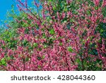 tree with pink flowers on a... | Shutterstock . vector #428044360