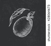 vector illustration of fruit... | Shutterstock .eps vector #428064673