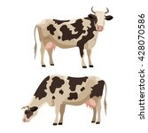 spotted cow vector illustration ...   Shutterstock .eps vector #428070586