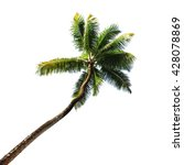 palm tree isolated on white...   Shutterstock . vector #428078869