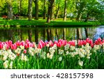 Blooming Flowers In Keukenhof...