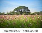 big tree in a field | Shutterstock . vector #428162020