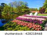 blooming flowers in keukenhof...   Shutterstock . vector #428218468