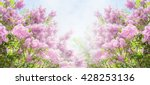 lilac bush over sky background. ... | Shutterstock . vector #428253136