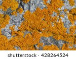Lichen Caloplaca Marina At The...