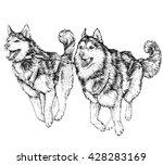 husky sled race. running husky. ...   Shutterstock .eps vector #428283169