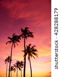 tropical palm trees silhouettes ... | Shutterstock . vector #428288179