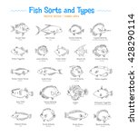 fish sorts and types. coral... | Shutterstock .eps vector #428290114