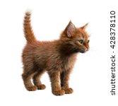 3d Rendering Red Kitten...