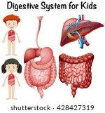 digestive system for kids... | Shutterstock .eps vector #428427319