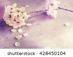 blossom tree over nature... | Shutterstock . vector #428450104