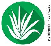 aloe vera plant flat icon | Shutterstock .eps vector #428471260