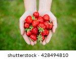 Fresh Strawberries Closeup....