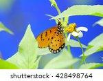 Butterfly And Flower On Blurry...