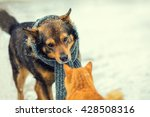 Stock photo dog with knitted scarf tied around the neck and cat sniffing each other in winter 428508316