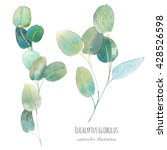 watercolor eucalyptus with... | Shutterstock . vector #428526598
