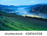 Small photo of Morning scenery of tea gardens in the deep blue twilight before dawn with beautiful lights from the village in the valley and ethereal fog in a fresh spring atmosphere in Ping-ling, Taipei Taiwan