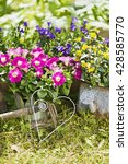 outdoor gardening tools and... | Shutterstock . vector #428585770
