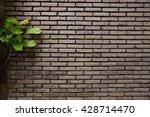 green plant velcro climbing and ... | Shutterstock . vector #428714470