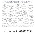 fish sorts and types. various... | Shutterstock .eps vector #428728246