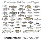 fish sorts and types. various... | Shutterstock .eps vector #428728249