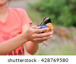 Small photo of Bird relinquish, bird in lady hands