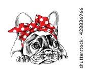 french bulldog portrait in a... | Shutterstock .eps vector #428836966