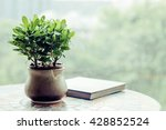 Potted Green Plants On Table