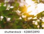 Abstract Blur Bokeh Sunlight...