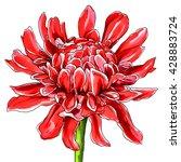 red oriental ginger flower in...   Shutterstock . vector #428883724