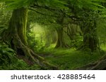 tropical jungle in southeast... | Shutterstock . vector #428885464