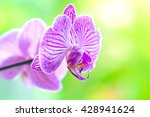 delicate purple flowers of... | Shutterstock . vector #428941624