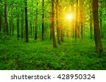 forest with sunlight. the sun... | Shutterstock . vector #428950324