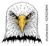eagle head is an illustration... | Shutterstock .eps vector #429024844