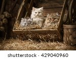 Stock photo portraits fluffy tabby kittens sleeping in an old barrel with a straw in the attic 429040960
