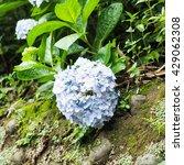 beautiful purple flowers   Shutterstock . vector #429062308