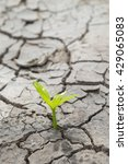 concept new life. rising sprout ... | Shutterstock . vector #429065083