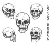 hand drawn skulls. blackicons... | Shutterstock .eps vector #429077284
