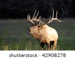 A Large Bull Elk Bugles To...