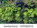 leaf   Shutterstock . vector #429086914