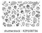 forest autumn collection.... | Shutterstock .eps vector #429108736