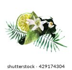 watercolor bergamot blossom... | Shutterstock . vector #429174304