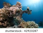 ocean coral and fish | Shutterstock . vector #42923287