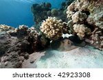 ocean coral and fish | Shutterstock . vector #42923308
