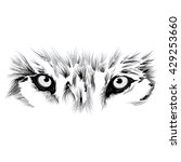 wolf eyes | Shutterstock .eps vector #429253660