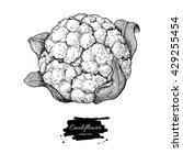 cauliflower hand drawn vector... | Shutterstock .eps vector #429255454