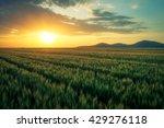 beautiful wheat field beneath... | Shutterstock . vector #429276118