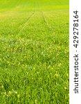 sunlight over a grass landscape ...   Shutterstock . vector #429278164