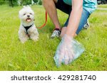 owner cleaning up after the dog ... | Shutterstock . vector #429281740