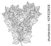 peony bouquet. vector. coloring ...   Shutterstock .eps vector #429323818